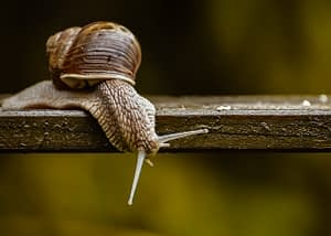 snail, nature conservation, protected animal